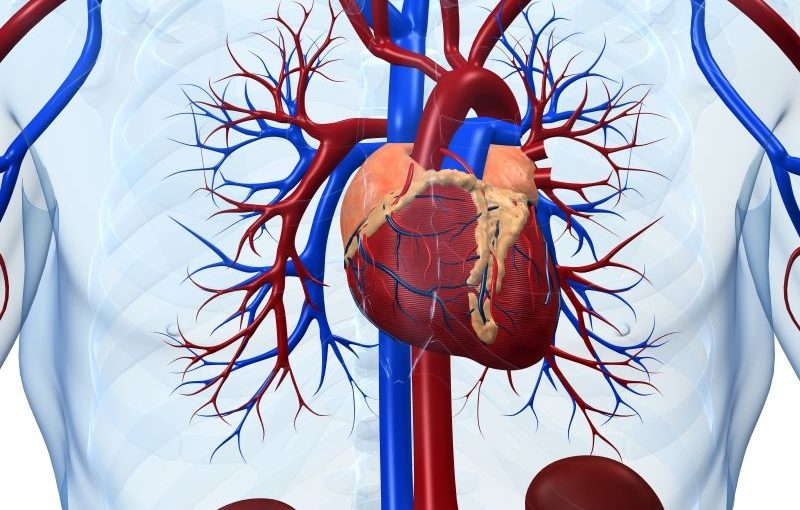 Healthier Heart, Better Brain in Old Age
